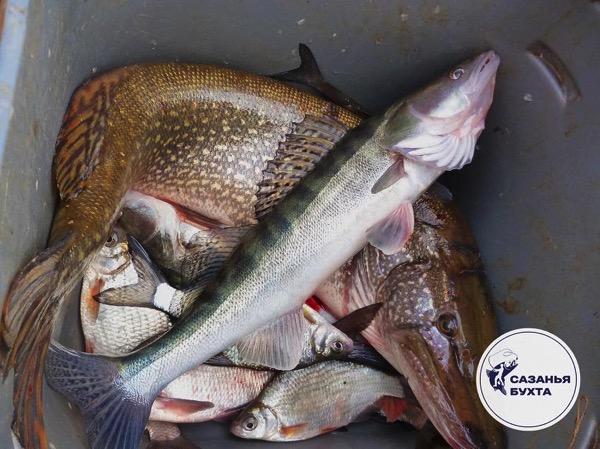 Астраханская речная рыба